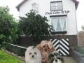 Het huis waar onze hondjes wonen