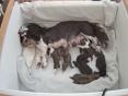 Mama en haar kindjes, 5e dag