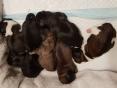Geboren 4 reutjes en 3 teefjes, mama en de kindjes maken het goed