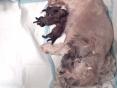Daar zijn de eerste puppekindjes