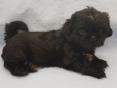 Reutje , 7 weken oud