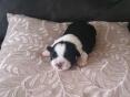 Teefje 2. zwartwit, 11 dagen oud
