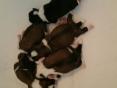 Puppekindjes, 6 dagen oud