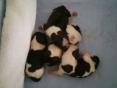 4 kleine puppekindjes 1e dag