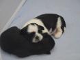 Rosi en scarlett, 2 teefjes ,2 weken oud