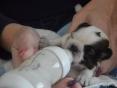 Reutje, 2 weken oud