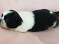 Teefje, 2 weken oud