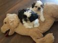 Noortje en Yoshi, 7 weken oud