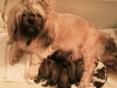 Een trotse mama met haar kindjes