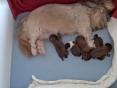 De puppekindjes, 4 dagen oud